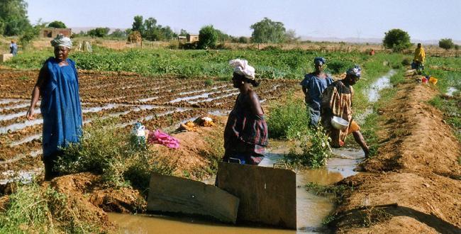 Irrigation Senegal
